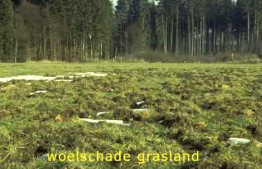 WildSchade-aan-grasland