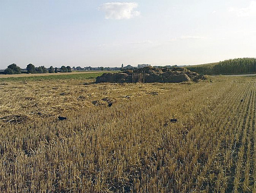 Kraaien bij mesthoop in het veld