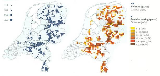 voorkomen roek in Nederland