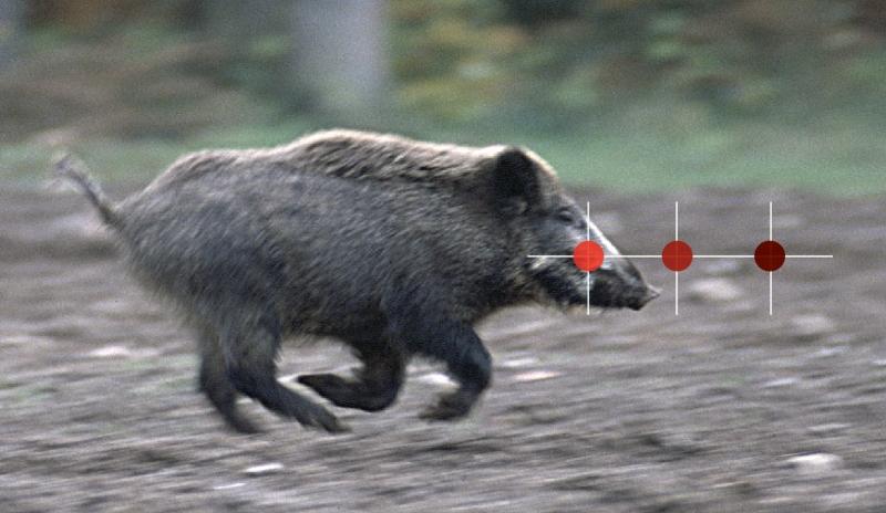 voorhouden kogel op lopend wild zwijn