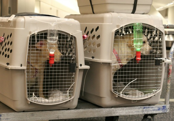 Can You Take Your Dog On A Air Canada Flight