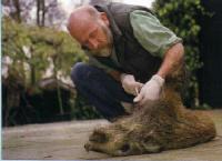 Onderzoek-wilde-varkens_small_small