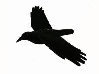basispagina-website_clip_image021