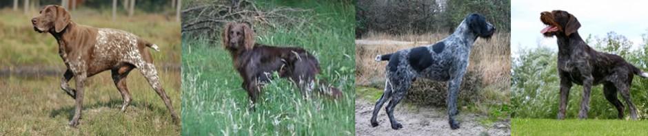 cropped-Duitse-staande-honden-kopje