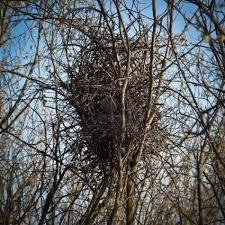 ekster nest