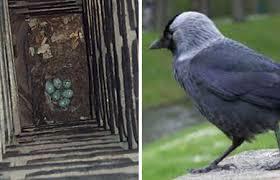 nest-kauw