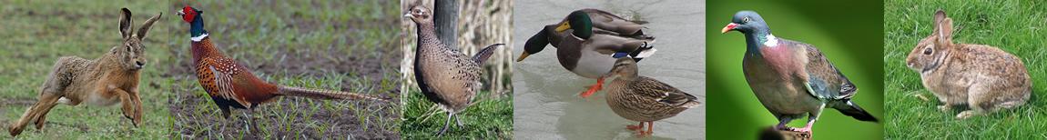 Kopje wildsoorten nederland