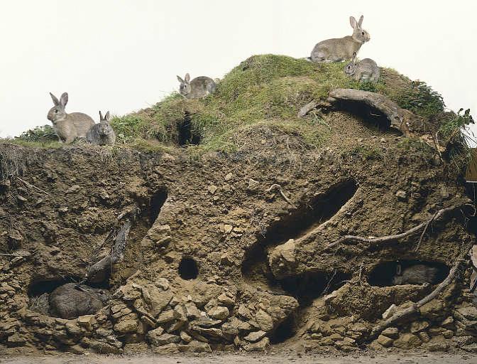 konijnenburcht